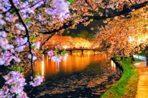 弘前の夜桜(2)